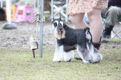 短犬種展ことね (55)