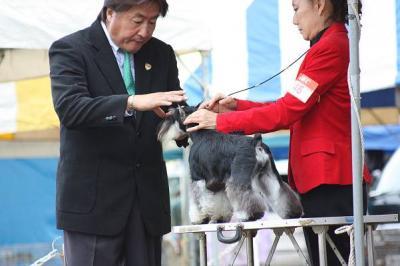短犬種展 (28)