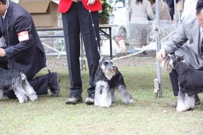 短犬種展 (2)