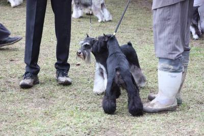 短犬種展 (6)