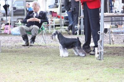 短犬種展 (21)