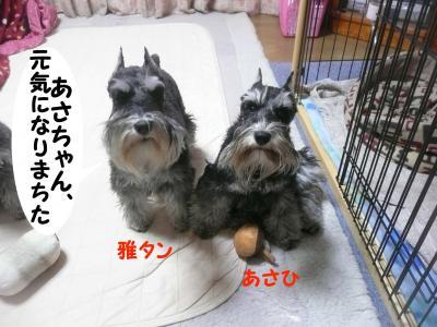 雅&あさひ1月26日