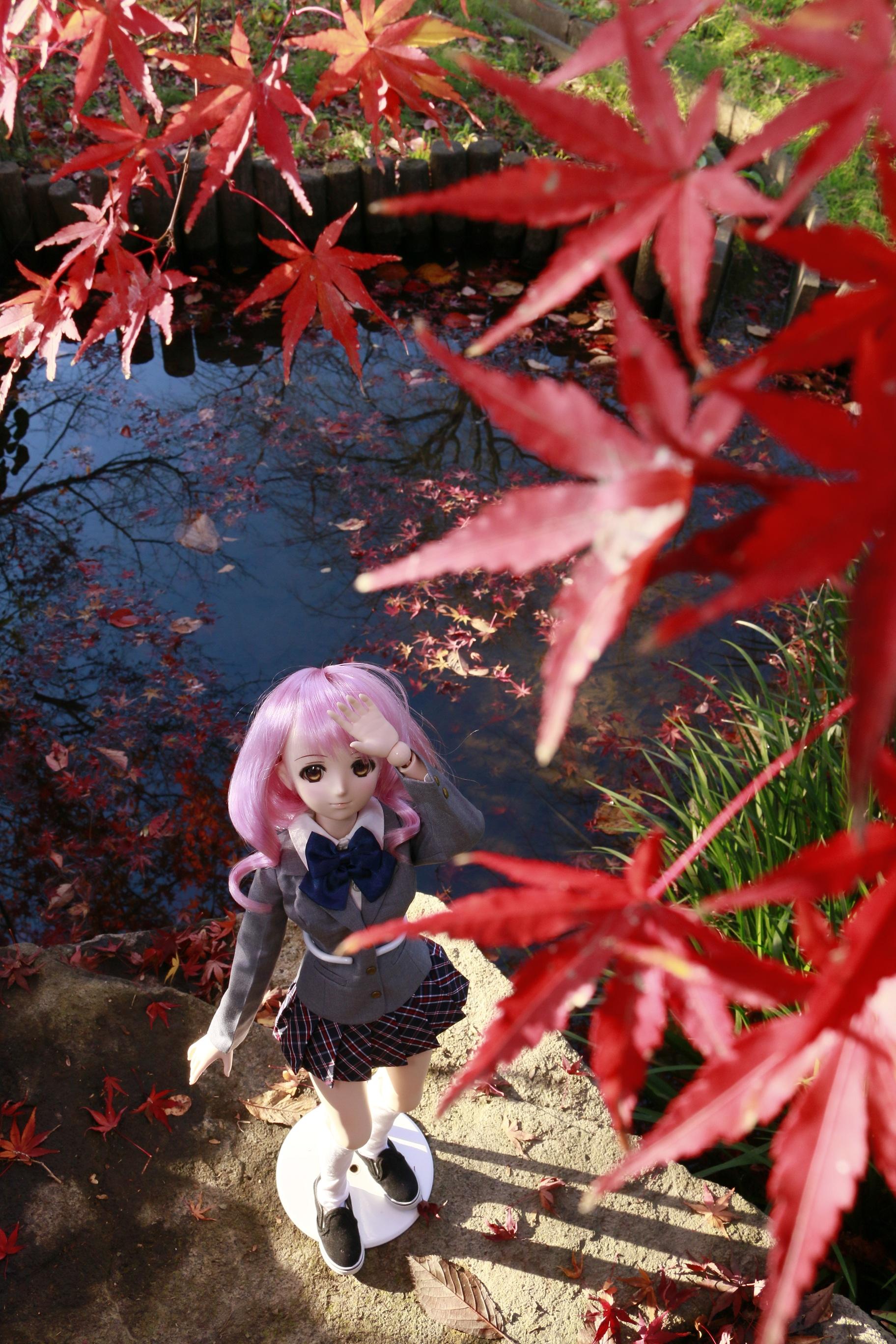 モモ見上げる紅葉