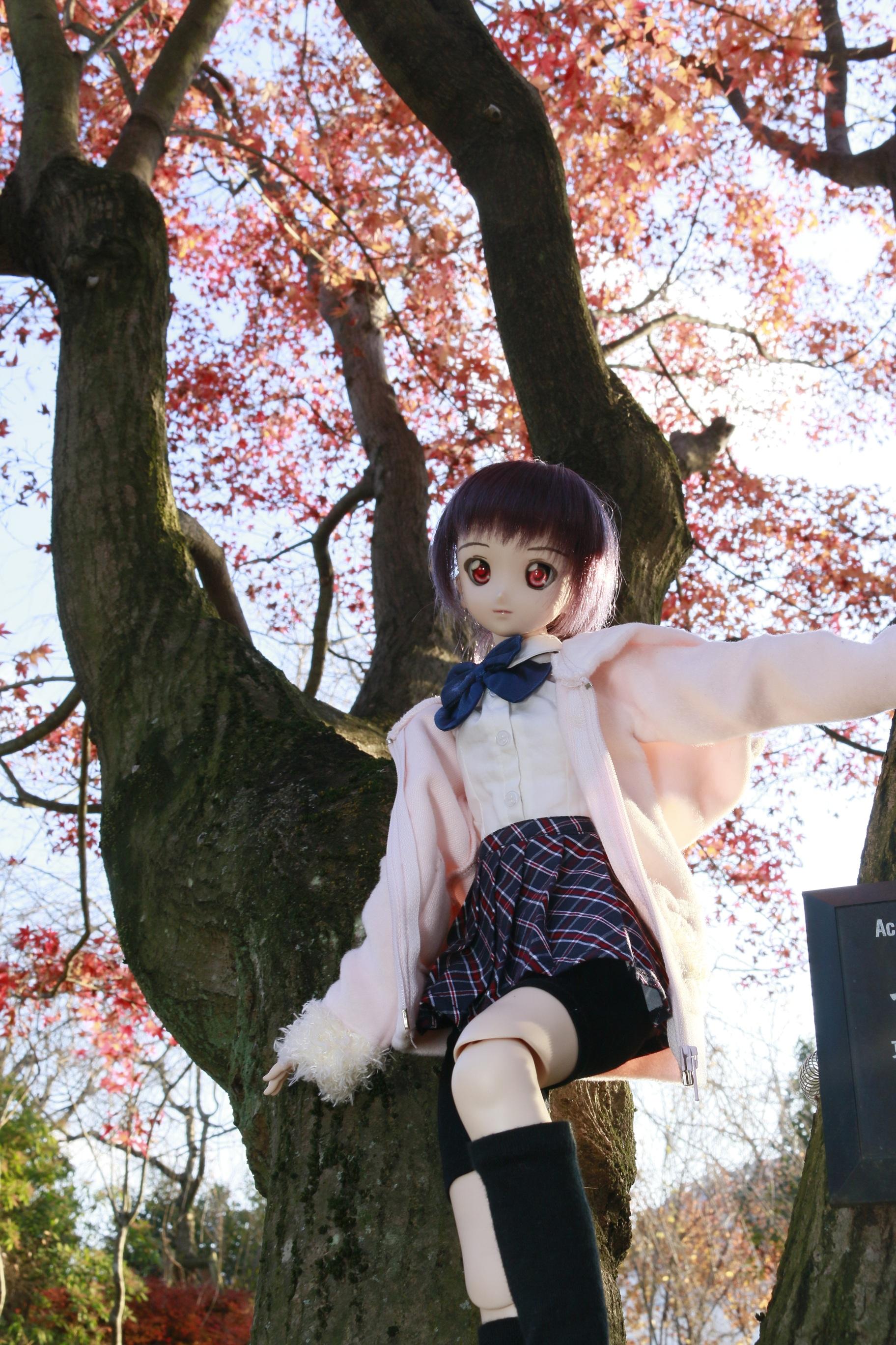 木登りフィール