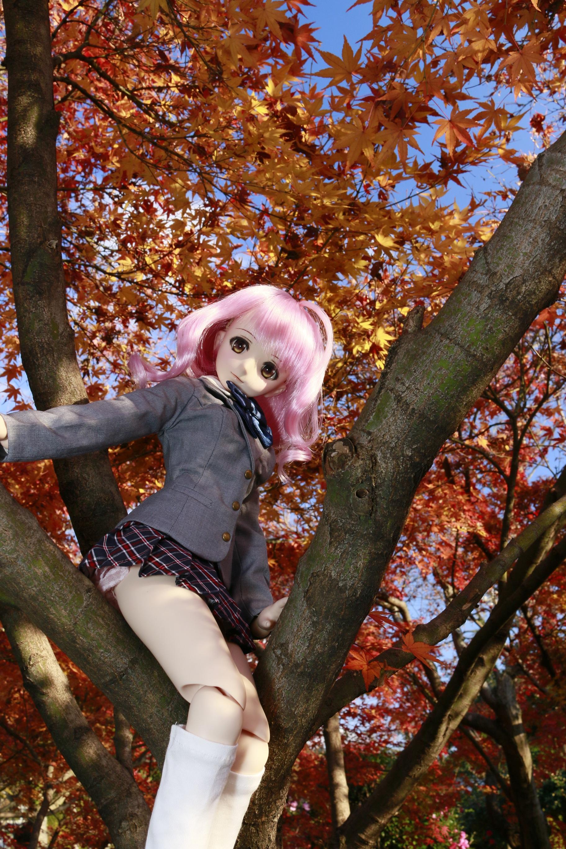 木登りモモちゃん