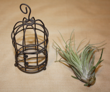 airplants