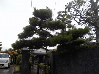 松Before