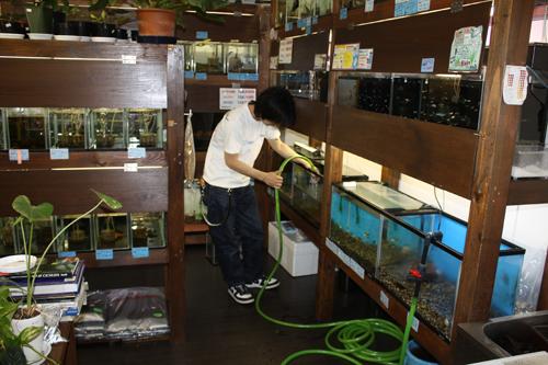 ありがあとうございます。東海 岐阜 熱帯魚 水草 観葉植物販売 Grow aquarium