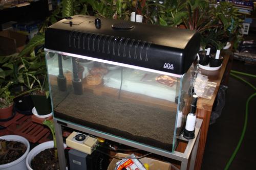 ホシクサ育成水槽 トニナ スターレンジ 東海 岐阜 熱帯魚 水草 観葉植物販売 Grow aquarium