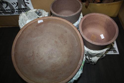 ADA展示品 陶製水槽 東海 岐阜 熱帯魚 水草 観葉植物販売 Grow aquarium