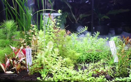 水草販売水槽 東海 岐阜 熱帯魚 水草 観葉植物販売 Grow aquarium