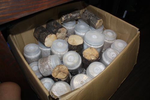 産卵木、菌糸ビン、マット 東海 岐阜 熱帯魚 水草 観葉植物販売 Grow aquarium