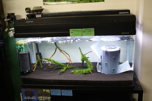 レッドビーシュリンプ900水槽 東海 岐阜 熱帯魚 水草 観葉植物販売 Grow aquarium