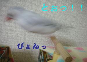 跳びましたぁっ!