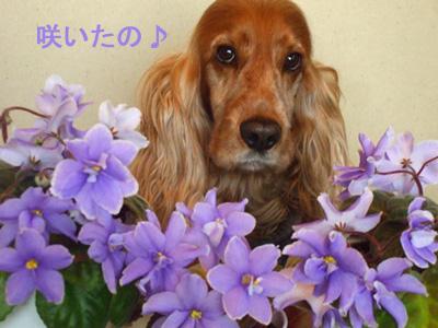お花に囲まれたPさん