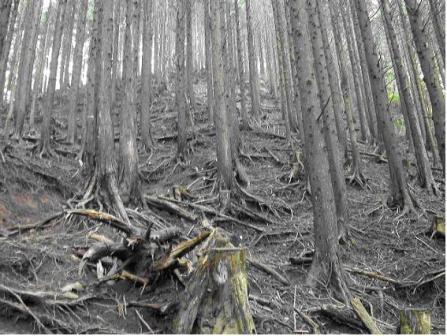 人工林11