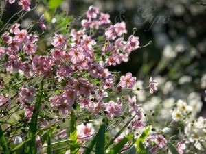 津久井湖花の苑地 J