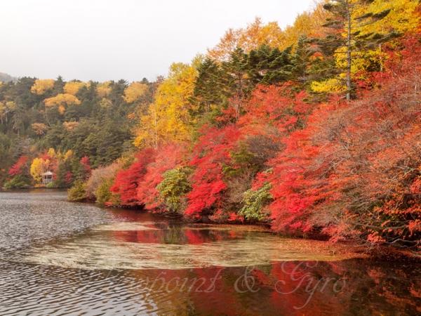 白駒の池の紅葉 A