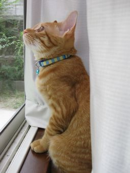 窓辺のティム