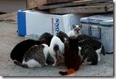 12110402 漁港の猫