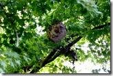 12110412 きれいな模様のハチの巣