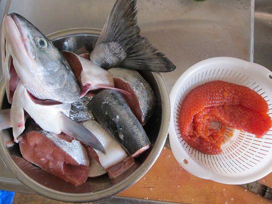 鮭をさばく