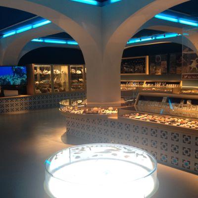 古宇利オーシャンタワー 貝の博物館