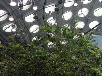 熱帯雨林体験コーナー