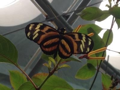 熱帯雨林体験コーナーで蝶と戯れ
