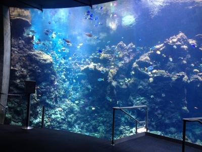 水族館コーナー
