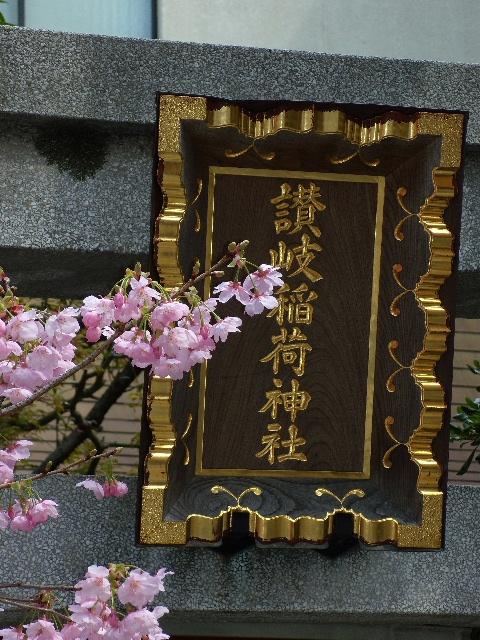 桜 花満開
