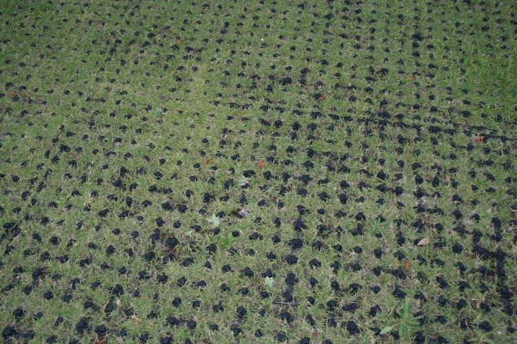いつものリハビリ草原は ハゲ度 4