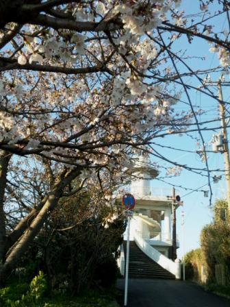 2011sakura2_20110405160856.jpg