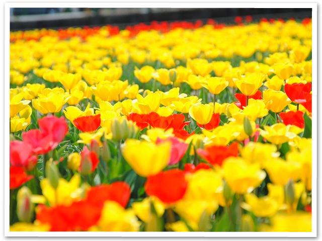 お花見☆羽村水上公園