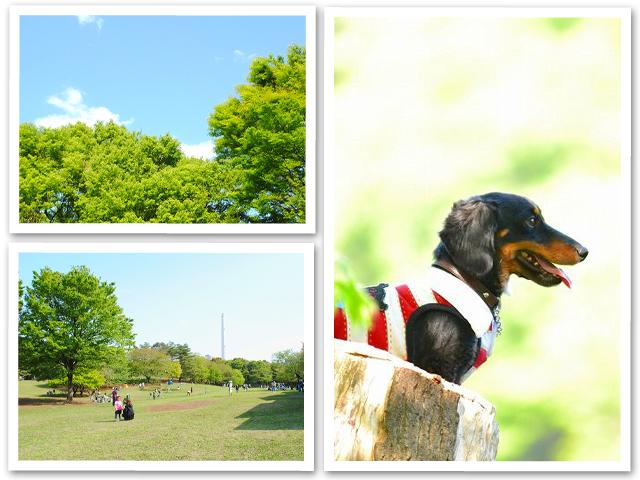 お散歩☆光が丘公園