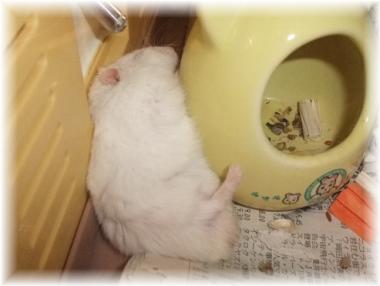 トールのお昼寝b