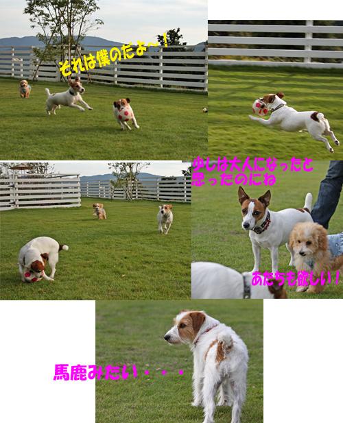 10231_20101106005359.jpg