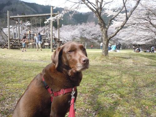 DSCN1790桜3