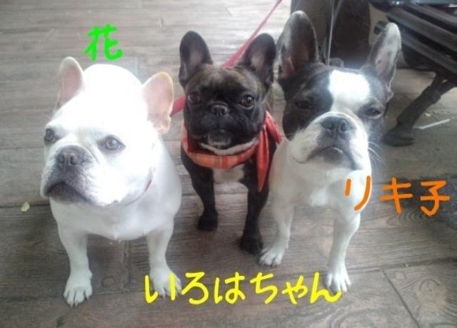 13_20110530161940.jpg