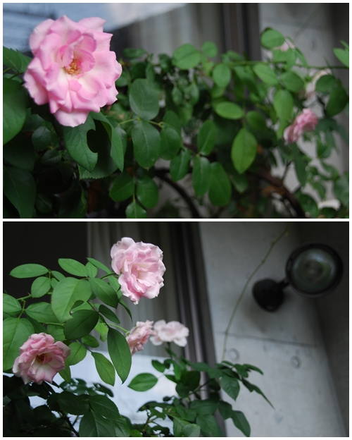 14_20120830142606.jpg