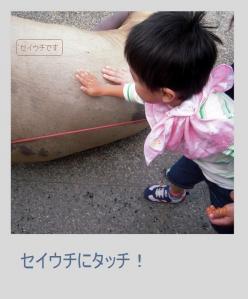2010-10-052.jpg
