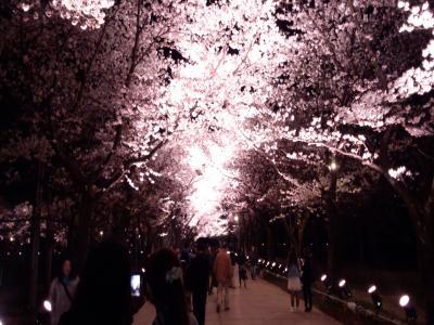 DSC_0135_convert_20120422163603桜ロード