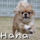 Hana1.jpg
