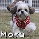 Maru2.jpg