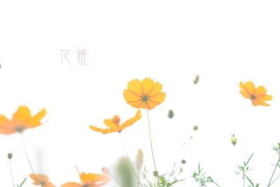 IMG_1831_edited-1のコピー
