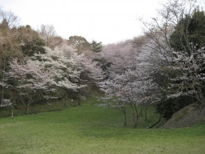 2012の桜
