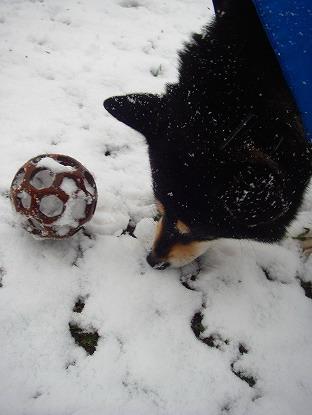 雪を食べる