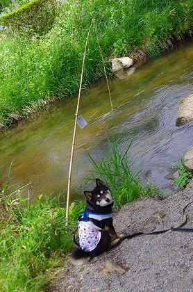 かっぱさんを釣る