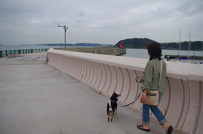 葉山マリーナ桟橋
