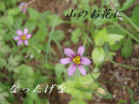 26MAY10 002hanagena